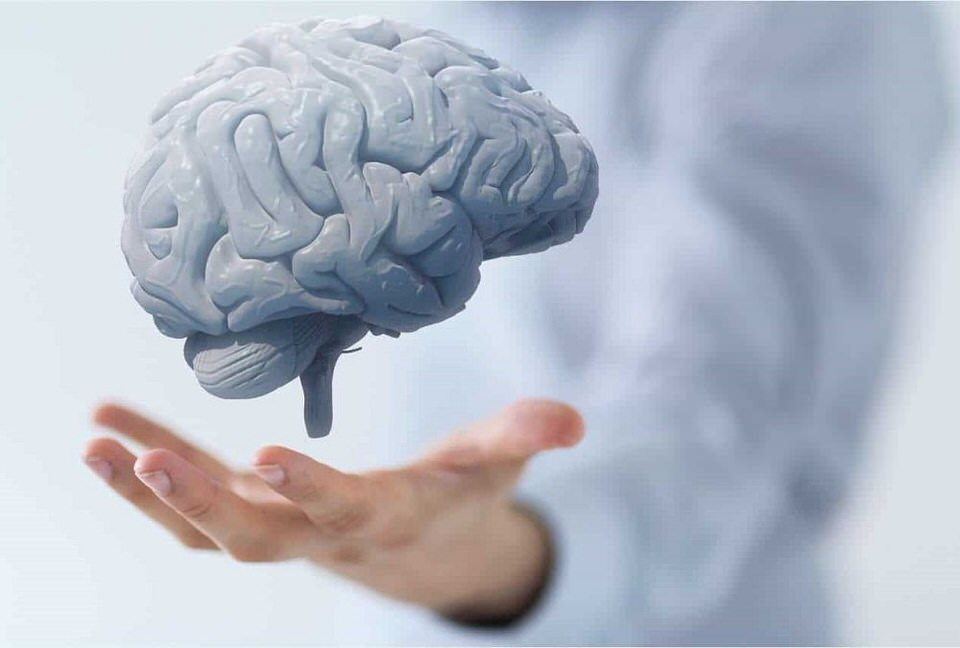 يساعد على تطور خلايا المخ والأعصاب