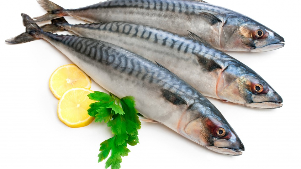 10 tops arabia for What are fatty fish
