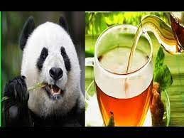 شاي باندا دونغ شاي من روث الباندا