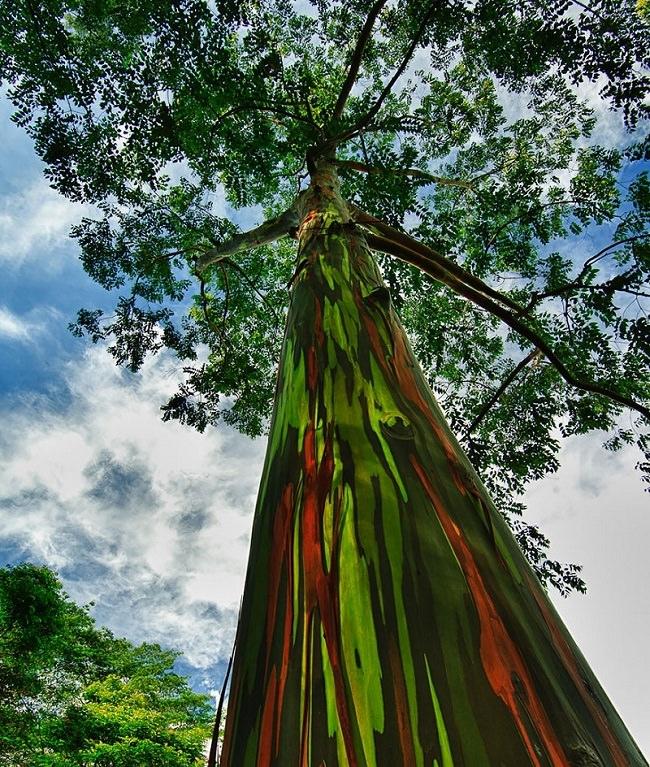 ما هي أجمل شجرة في العالم ؟ 15d57eae-7c8c-4286-bff7-ca9d6ced26ee