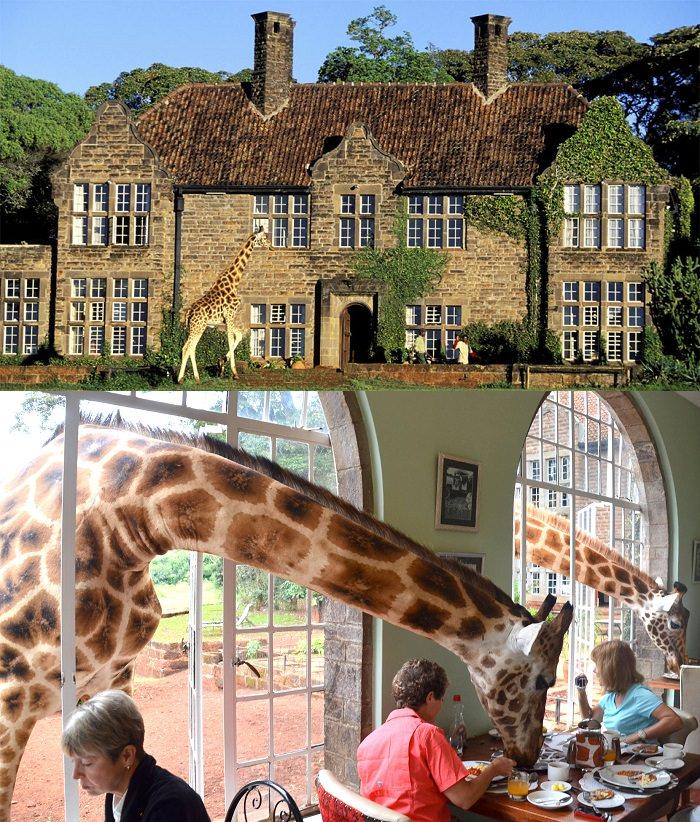 Giraffe Manor - كينيا