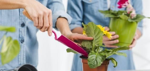 ازرع نباتات