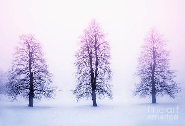 أشجار الشتاء في الضباب عند شروق الشمس