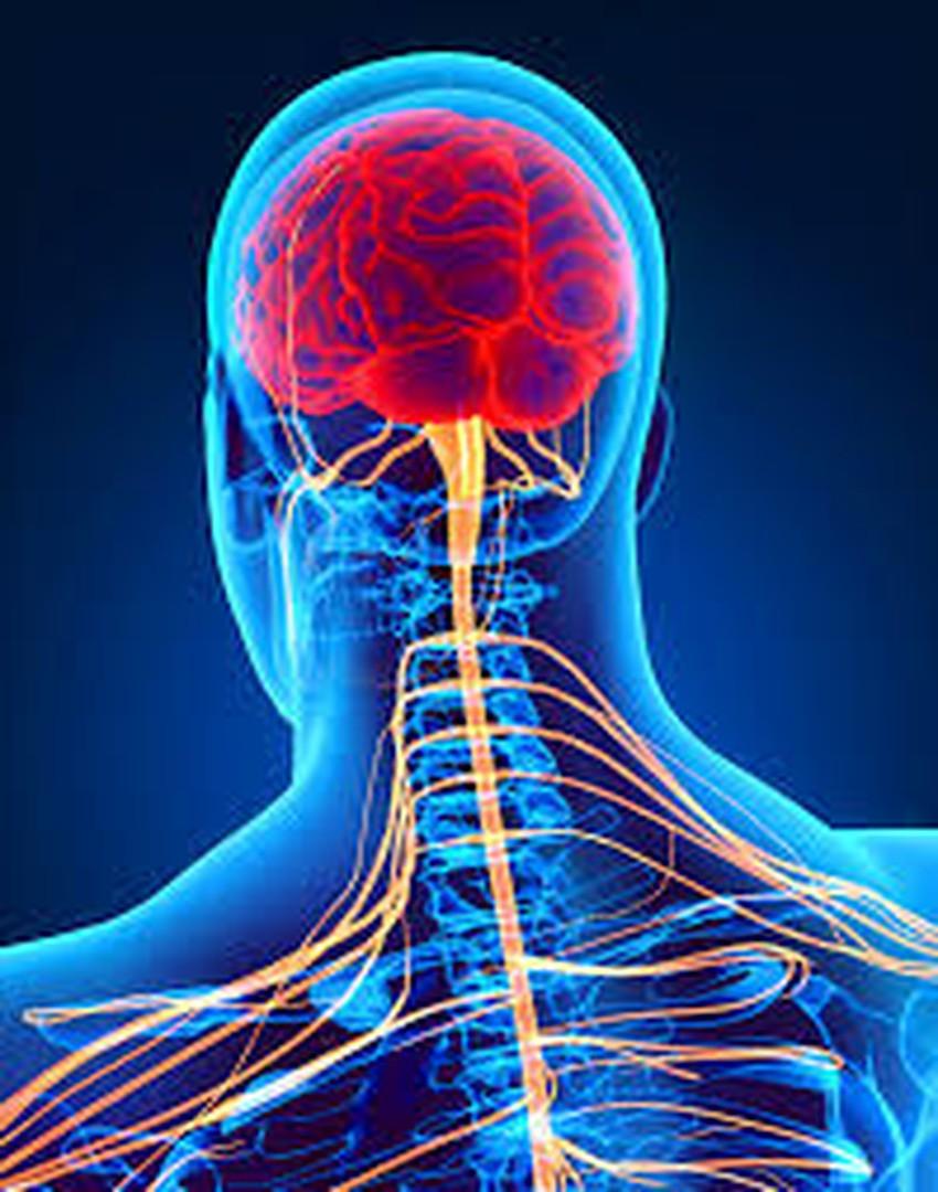 تعزيز صحة الجهاز العصبي