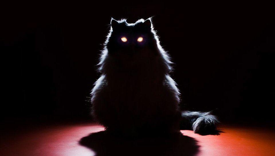 عيون القطط مثالية للظلام