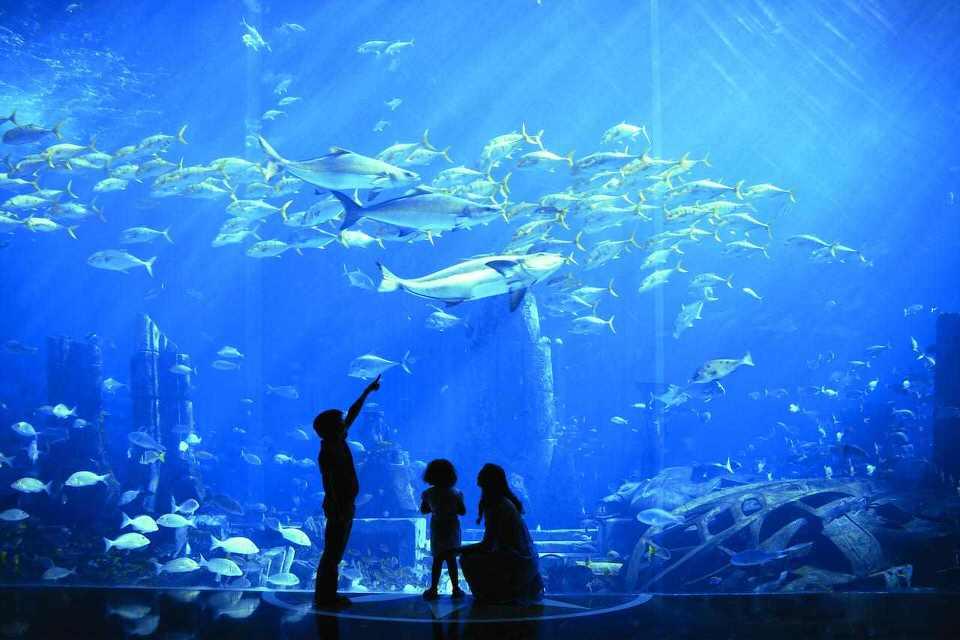 الكائنات البحرية في اتلانتس دبي