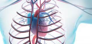 زيادة خطر الإصابة بأمراض القلب والكلى