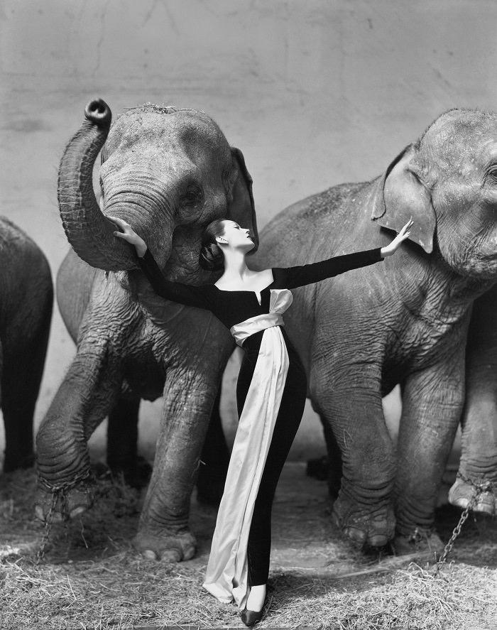 صورة «دوفيما مع الفيلة» - 1،151،976 دولار