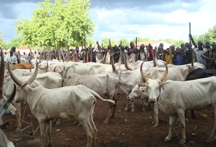 السودان - ما هو سعر البقر؟