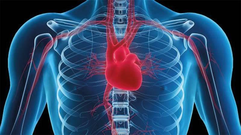 المحافظة على صحة القلب والأوعية الدموية