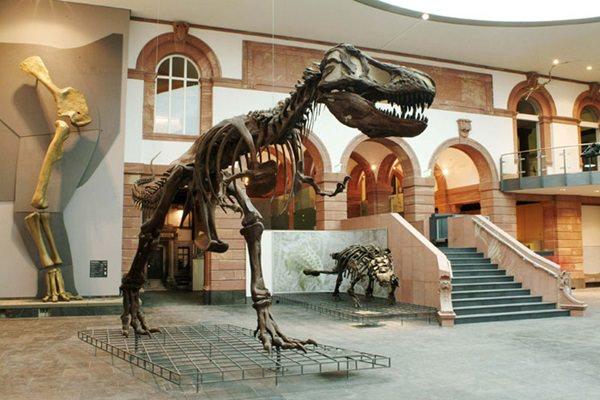 متحف الطبيعة سنكينبيرج