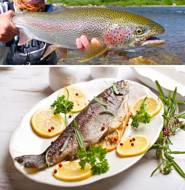 سمك السلمون المرقط - نسبة البروتينات 23.5%