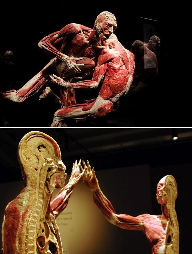 متحف المجسمات البشرية - أشهر متاحف الولايات المتحدة الأمريكية