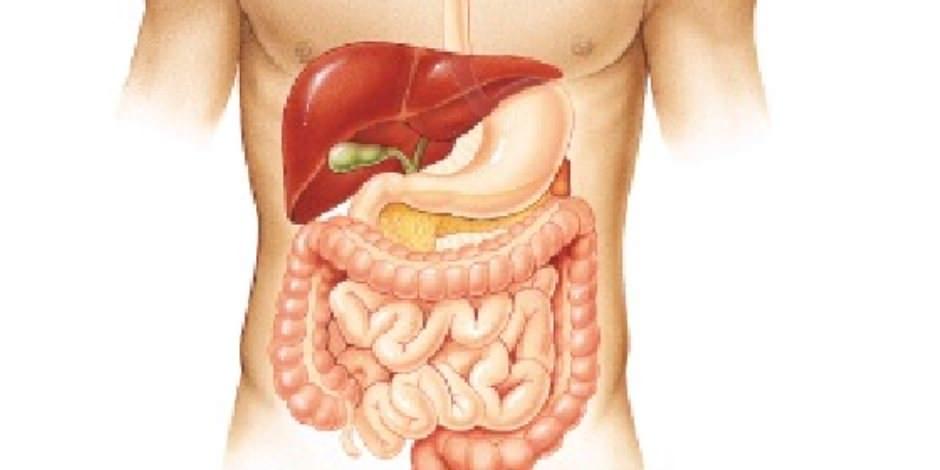 تعزيز الجهاز الهضمي
