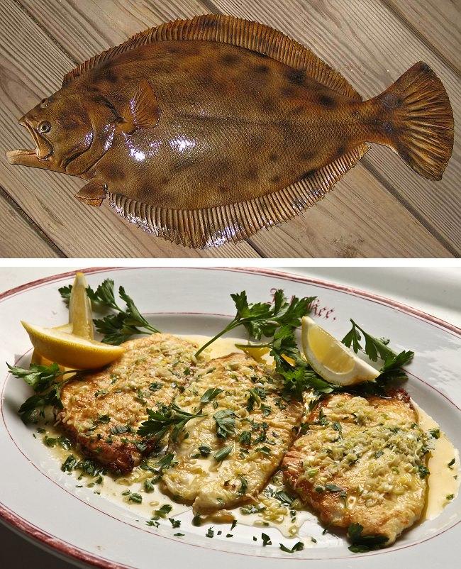 السمك المفلطح - نسبة البروتينات 12.9%
