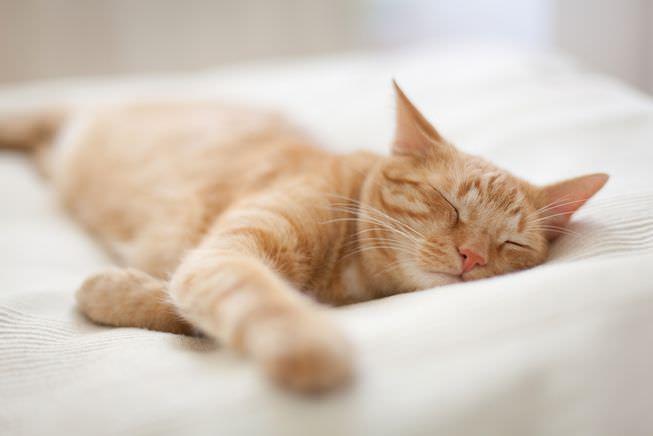 أحلام القطط