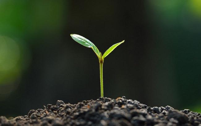 إسترداد صحة النباتات المنزلية