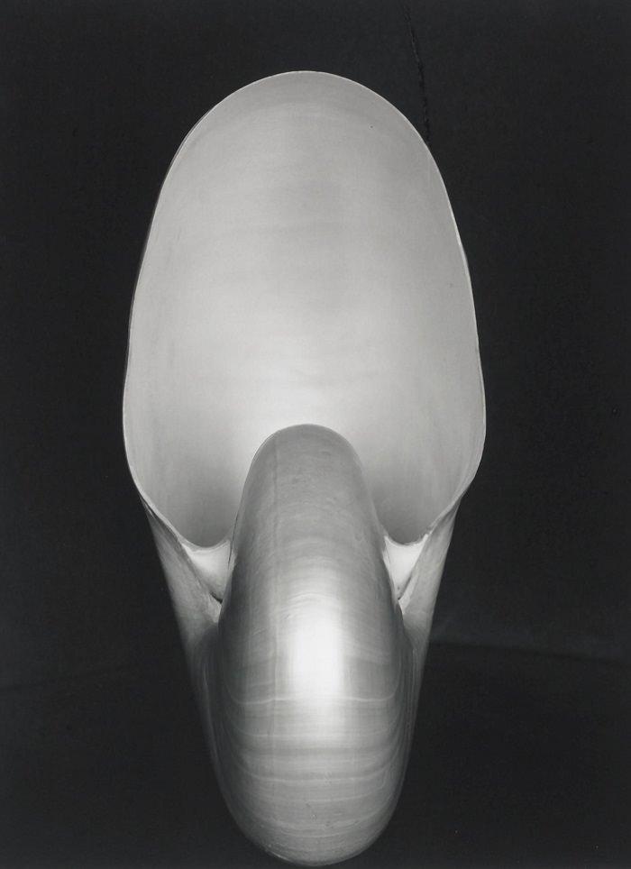 صورة «النوتر» - 1،105،000 دولار