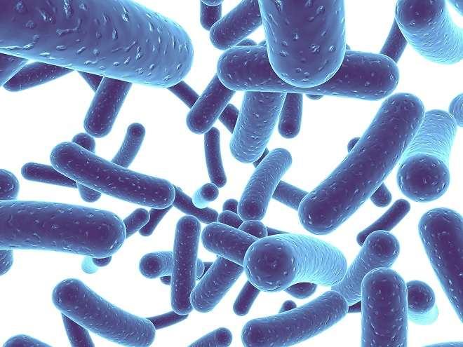 بكتيريا الشقاء الطفلية - Bifidobacterium Infantis