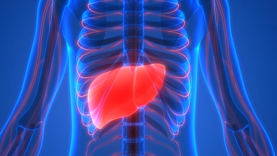 الشبت ومكافحة سرطان الكبد