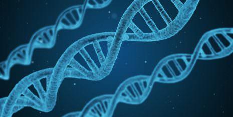 العامل الوراثي