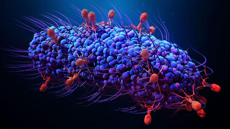 فوائد السواك يحارب البكتيريا الضارة والجراثيم