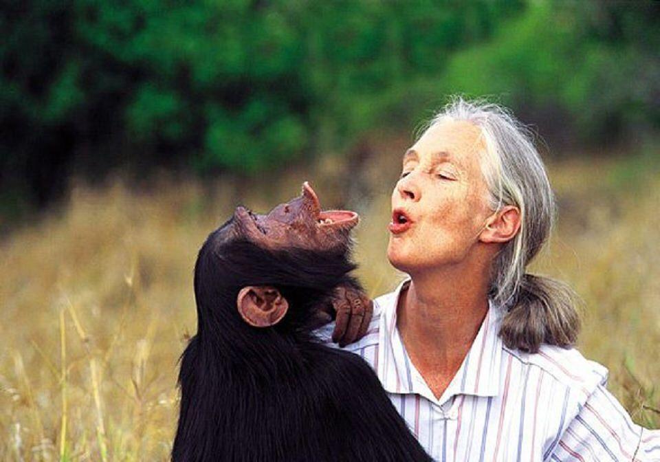 تطابق الحمض النووي مع الشمبانزي