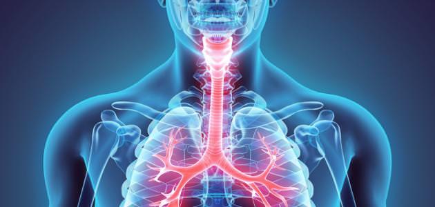 الفوائد الصحية للتمر على الجهاز التنفسي