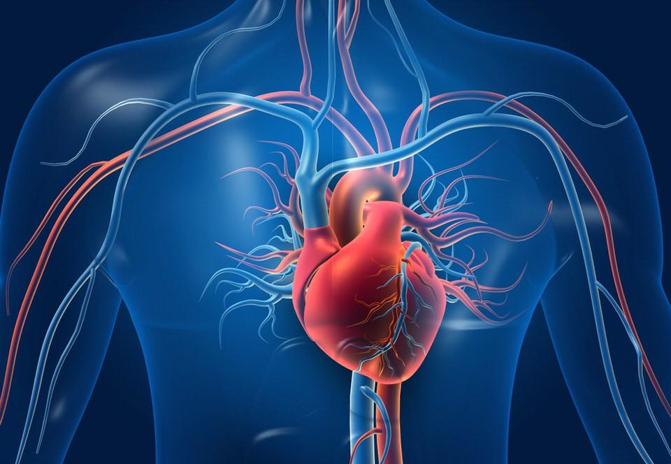 تعزيز صحة جهاز الدوران