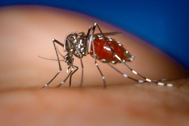 فيروس الضنك - معدل الوفيات 1% إلى 26%