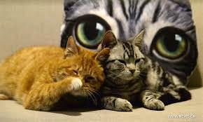القطط القديمة ربما لم تكن منزلية