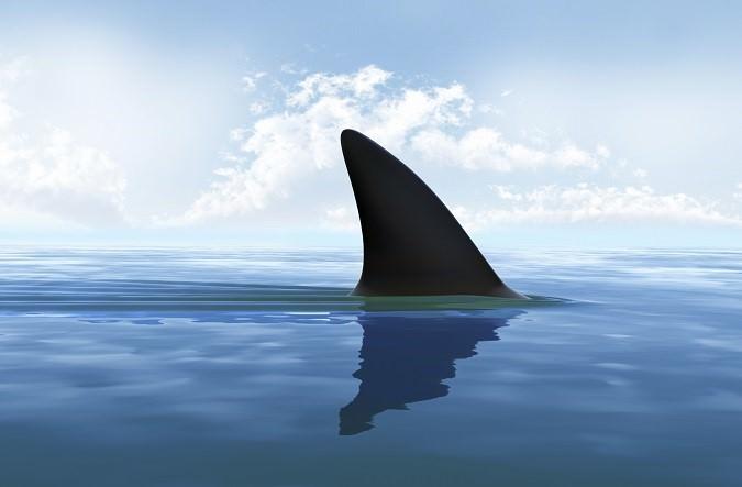 حذار من أسماك القرش القريبة