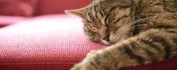 """""""هالو كيتي"""" أشهر قطة في العالم"""