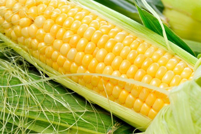 المحاصيل المعدلة وراثياً