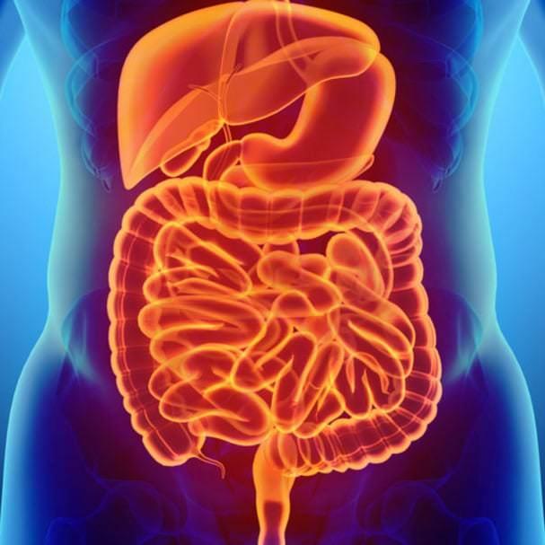 تحسين الجهاز الهضمي
