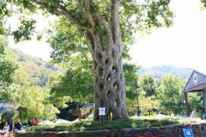 شجرة السلة
