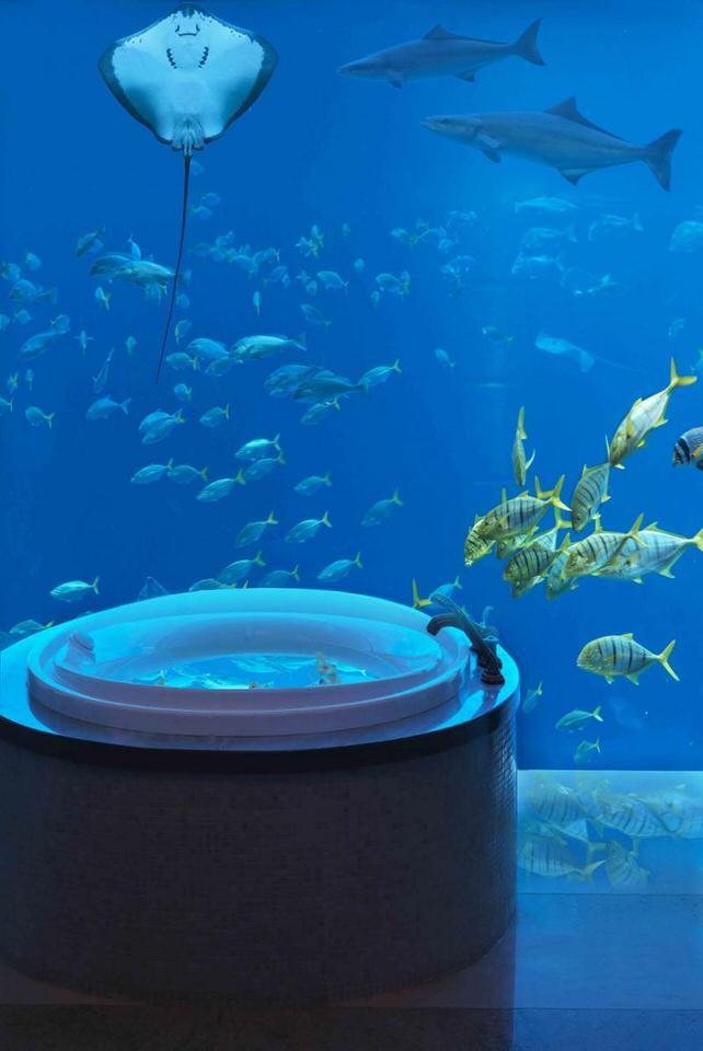الطبيعة البحرية في اتلانتس دبي