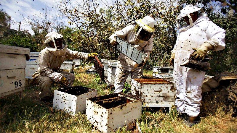 الممارسات الخاطئة في تربية النحل