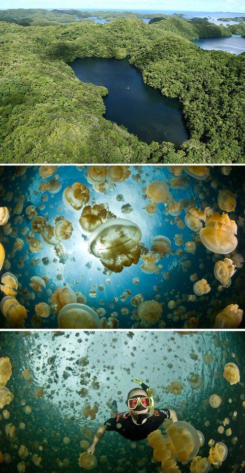 بحيرة قناديل البحر - جزيرة بالاو