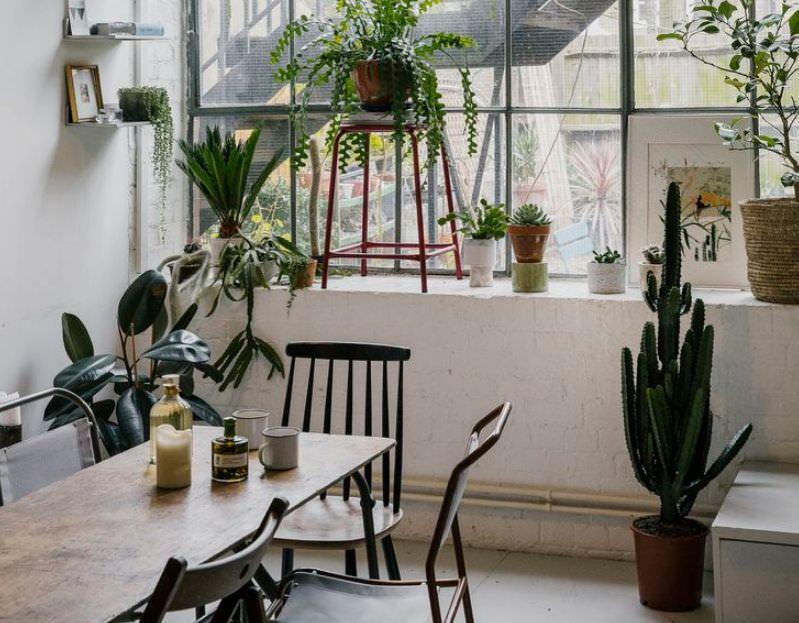 التخلص من النباتات الشوكية والمجففة