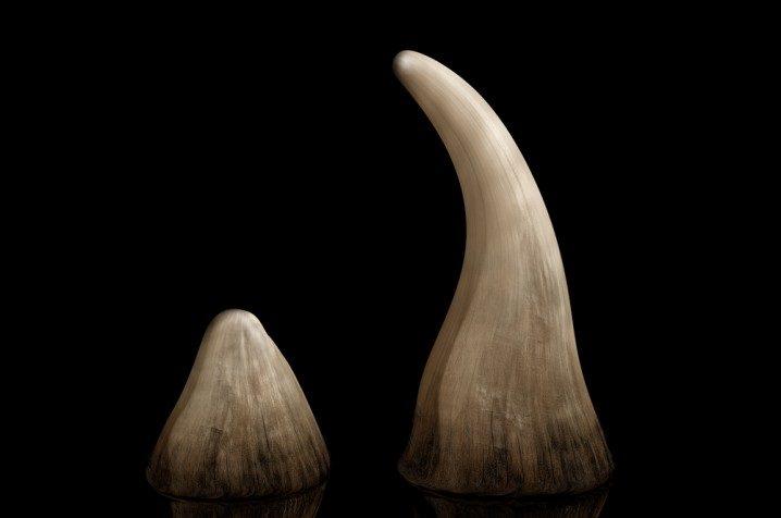 قرون وحيد القرن - 110$ للجرام الواحد