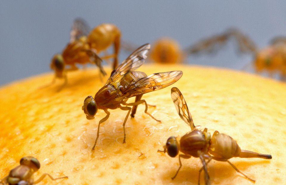 طريقة طرد الذباب بالعسل