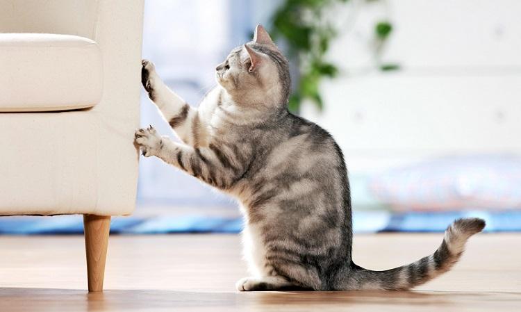 لمنع القطط من تخريب الاثاث